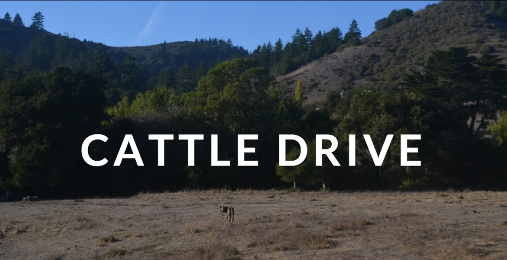 Cattle-Drive-Header