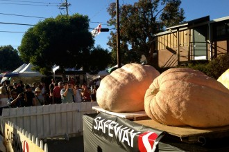 Crowds photograph pumpkins weighing over 1,000 pounds at Half Moon Bay's annual Art and Pumpkin Festival on Saturday October 18, 2014. (Miranda Shepherd/Peninsula Press)