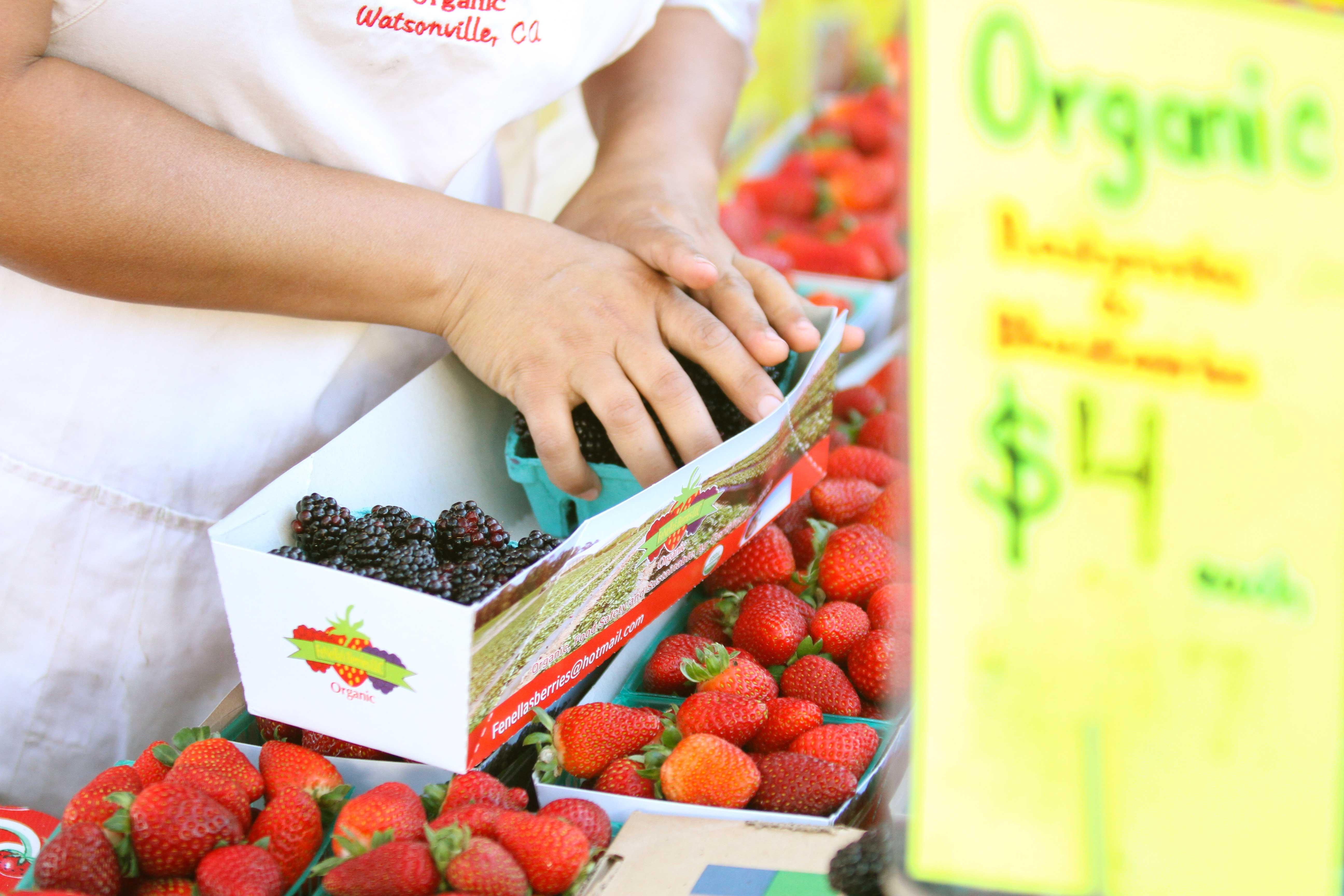 Organic blackberries are prepped for sale at Palo Alto's California Avenue Market. (Alex Blandino/Peninsula Press)