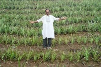 An Indian farmer surveys his field. India was one of the strongest adopters of Green Revolution seeds. (Photo courtesy of US AID)