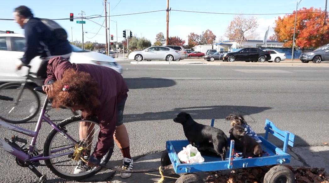 Gonzalez sets up a bike wagon for her three dogs.  (Jamie Stark/Peninsula Press)