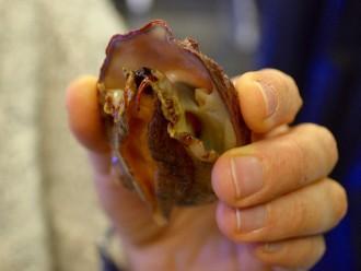 white abalone