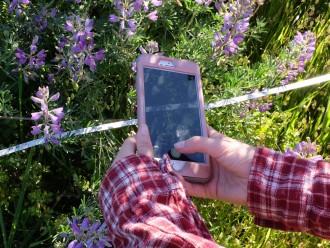 Flora 1 4x3