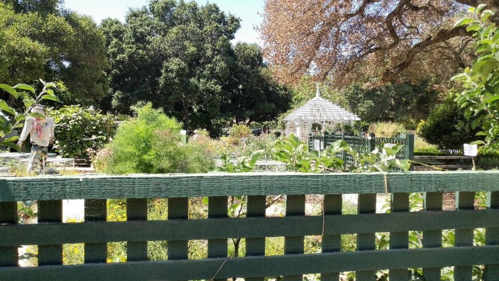 A view over the fence into Gamble's teaching garden and nearby blooming areas. (Ethan Cruikshank/Peninsula Press)