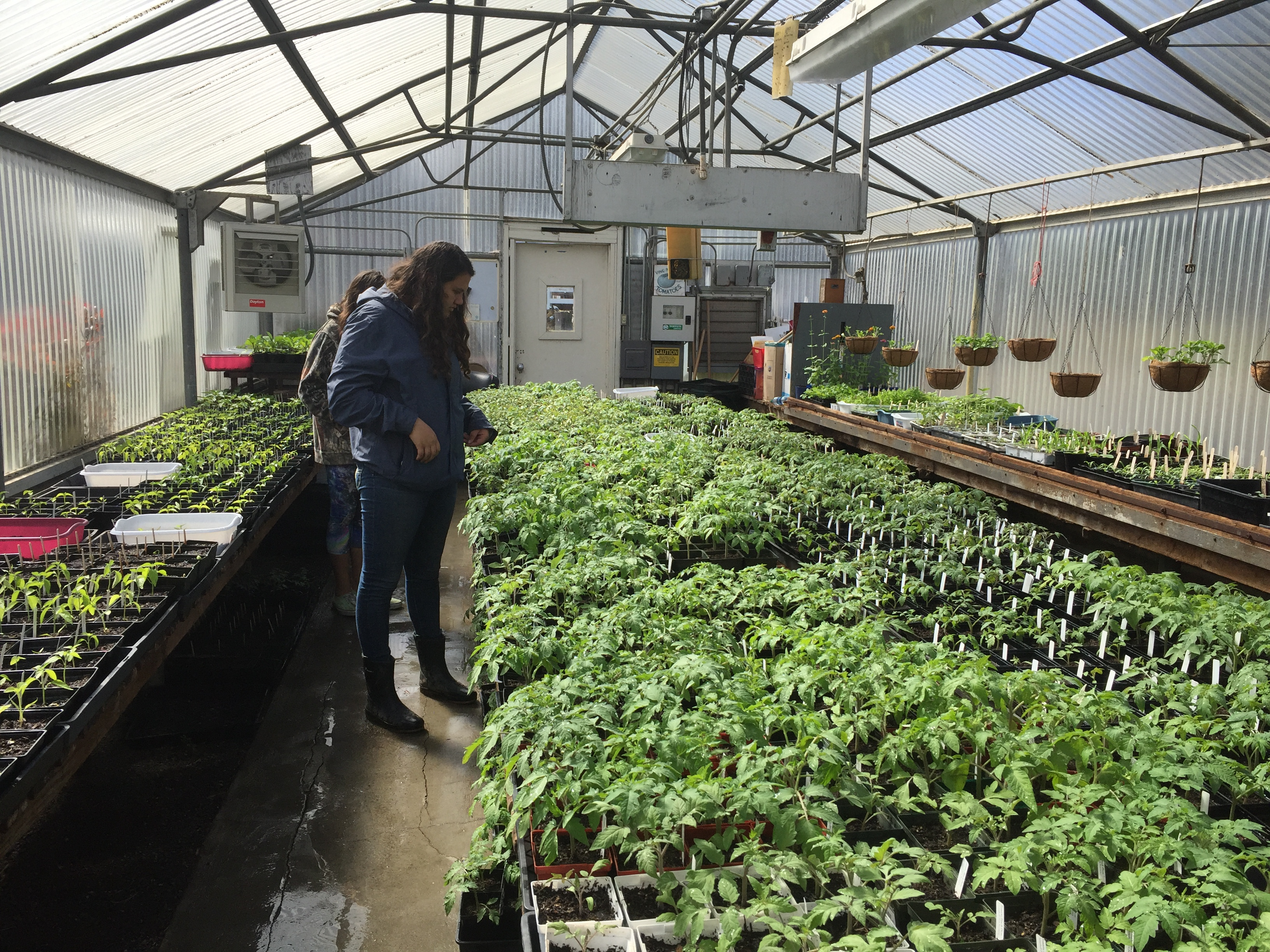 A young woman is inside a greenhouse.