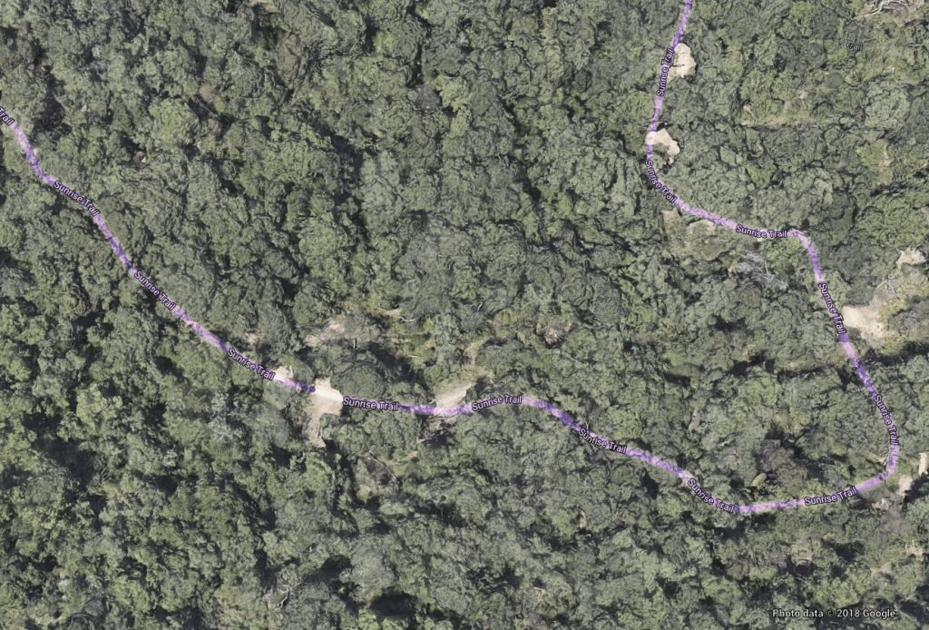 Aerial photo of a forest of trees with a trail cutting through them highlighted in purple