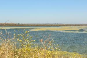 Part of the South Bay Salt Ponds that will be restored in the coming years