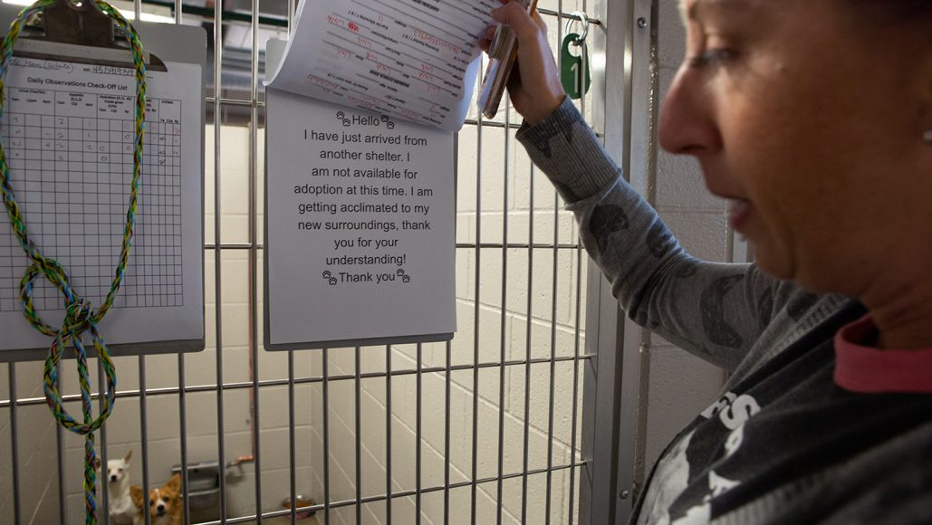 Sarah Varanini, Sacramento SPCA's media specialist, reads a sign notifying that the animals in the Kennel are in distress after being evacuated from the Kincade Fire and are not ready for adoption on Thursday, Oct. 31, 2019 in Sacramento, Calif. (Salma Loum/ Peninsula Press)