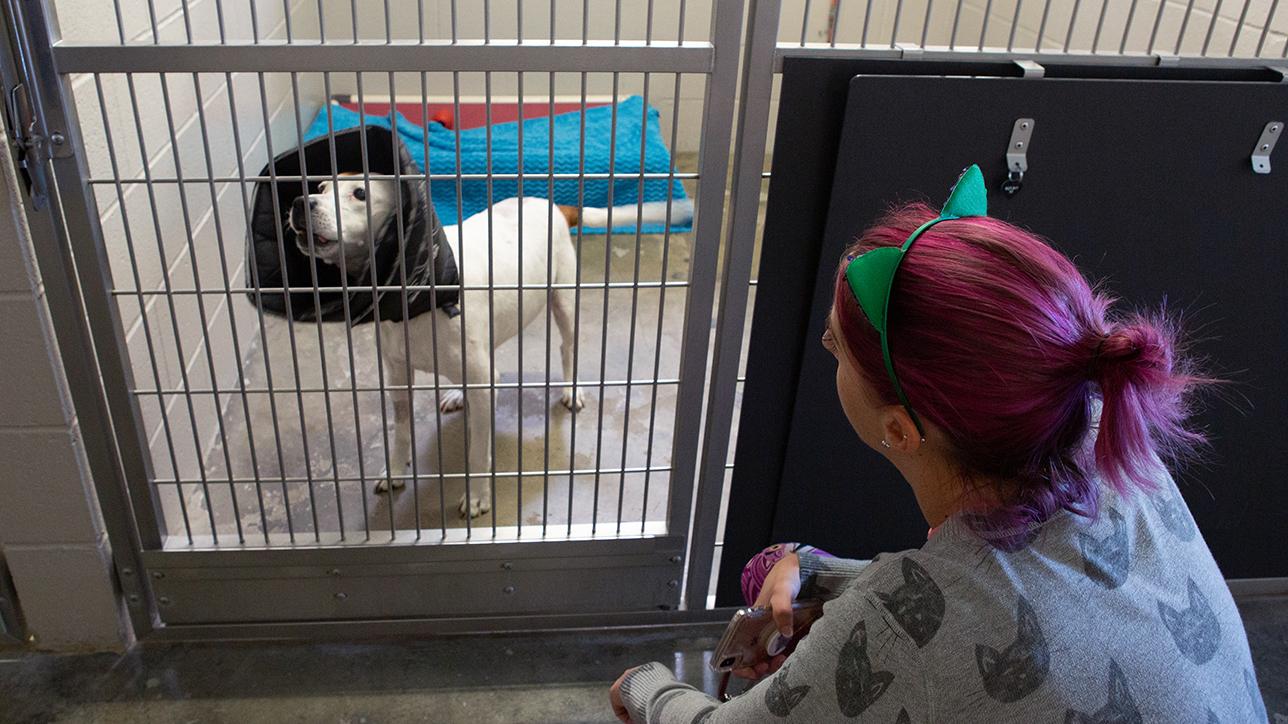 Sarah Varanini, Sacramento SPCA's media specialist, talks to one of the displaced dogs from the Kincade Fire on Thursday, Oct. 31, 2019 in Sacramento, Calif. (Salma Loum/ Peninsula Press)
