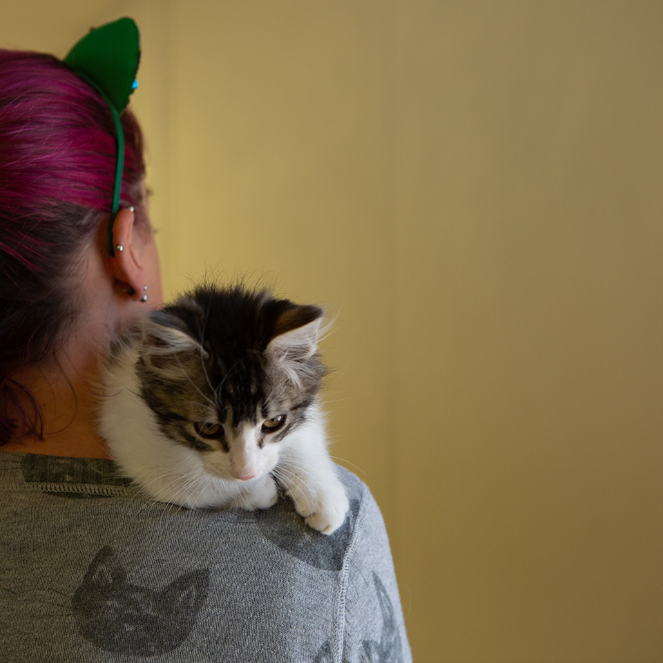 Sarah Varanini, Sacramento SPCA's media specialist, carries an adoptable kitten that was displaced twice by the Kincade Fires on Thursday, Oct. 31, 2019 in Sacramento, Calif. (Salma Loum/ Peninsula Press)