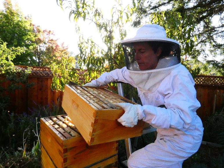 Beekeeper Tori Muir wears a protective suit in her backyard and carries a layer of her honeybee colony on Sunday, Oct 13th, 2019 in Burlingame, Calif. (Salma Loum/ Peninsula Press)