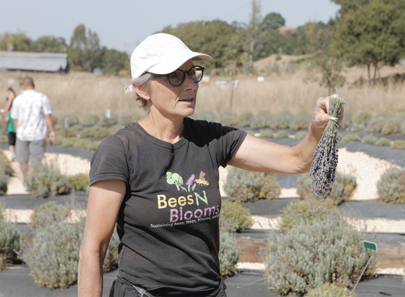 Dr. Susan Kegley stands in front of her labyrinth garden, holding lavander in her hand on Sunday, Oct. 13, 2019 at  BeesNBlooms Farm in Santa Rosa, Calif. (Salma Loum/ Peninsula Press)