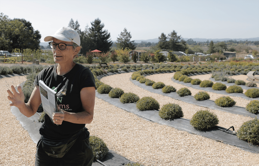 Dr. Susan Kegley stands in front of her labyrinth garden on Sunday, Oct 13, 2019 at BeesNBlooms Farm in Santa Rosa, Calif. (Salma Loum/ Peninsula Press)
