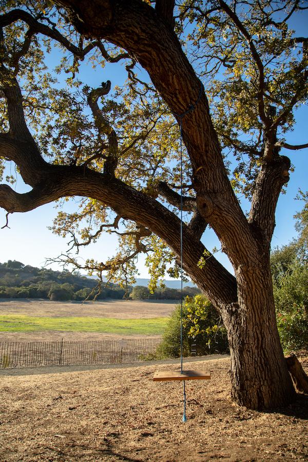 An empty swing hangs from a tree off of the Lake Lagunita trail. (Noah Cortez, Peninsula Press)