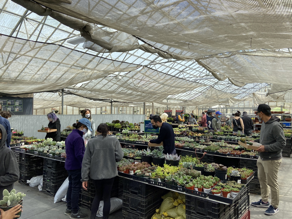 People looking through rows of plants